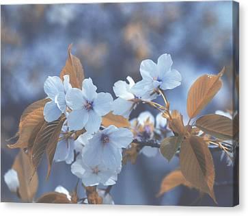 In Blue Canvas Print by Rachel Mirror