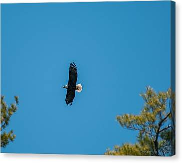 Canvas Print featuring the photograph In Flight by Brenda Jacobs