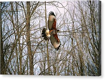 Canvas Print featuring the photograph In Flight by David Porteus