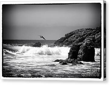 In Flight Canvas Print by John Rizzuto