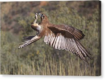 In Flight Meals Canvas Print by Venetia Featherstone-Witty