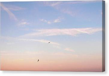 Canvas Print featuring the photograph In Flight Over Rehoboth Bay by Pamela Hyde Wilson