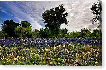 In Full Bloom Canvas Print by Cole Black