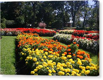 In Full Bloom Canvas Print by Kay Novy