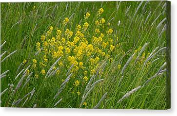 In Harmony With Nature 2 Canvas Print by Teo SITCHET-KANDA