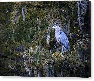 In His Element  Canvas Print by JC Findley