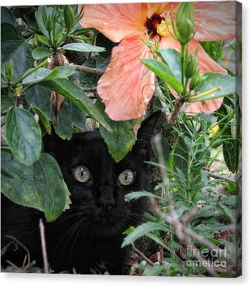 In His Jungle Canvas Print by Peggy Hughes
