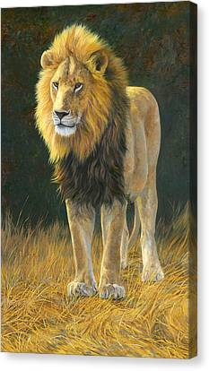 Lion Canvas Print - In His Prime by Lucie Bilodeau