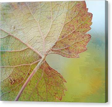 In Honor Of Autumn Canvas Print by Fraida Gutovich