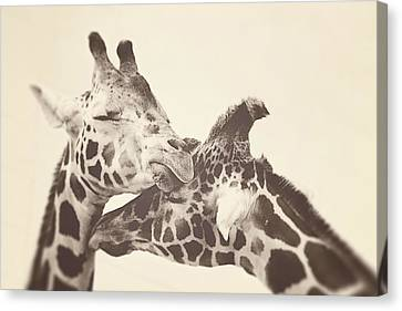 In Love Canvas Print by Carrie Ann Grippo-Pike