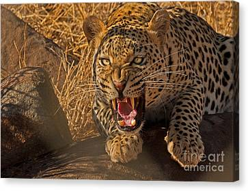 In No Uncertain Terms Canvas Print by Ashley Vincent