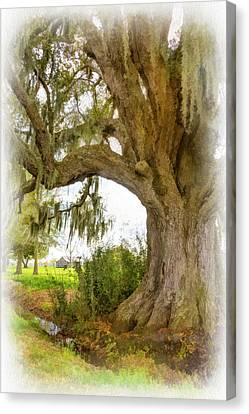 Evergreen Plantation Canvas Print - In Praise Of Live Oaks 2...paint by Steve Harrington
