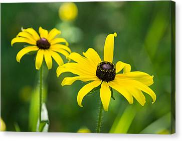 In Praise Of Yellow Canvas Print