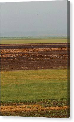 In Rows Canvas Print by Sarah Boyd