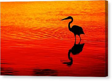 In Search Of Gold Canvas Print