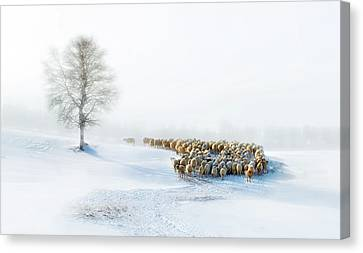 Snow Flake Canvas Print - In Snow by Hua Zhu