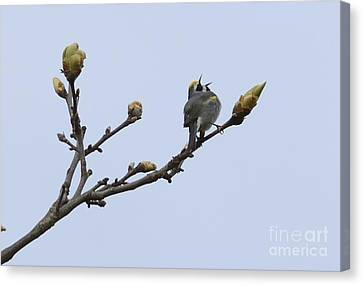 In Song Canvas Print by Randy Bodkins