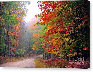 Country Road Canvas Print - In The Autumn Forest by Terri Gostola