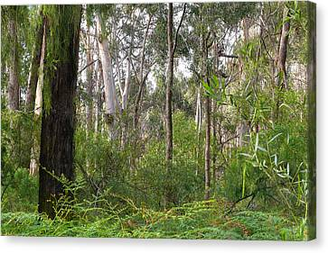 Canvas Print featuring the photograph In The Bush by Evelyn Tambour