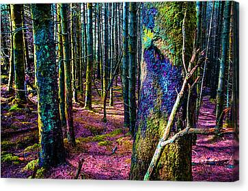 In The Colorful Wood. Rest And Be Thankful. Scotland Canvas Print by Jenny Rainbow