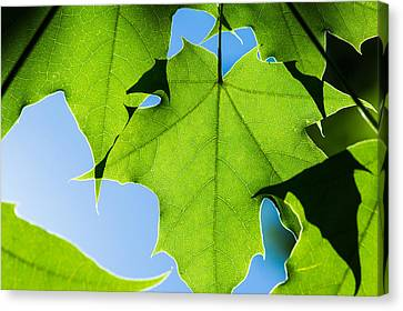 In The Cooling Shade - Featured 3 Canvas Print