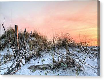 In The Dunes Of Pensacola Beach Canvas Print by JC Findley