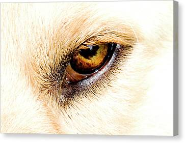 Canvas Print featuring the photograph In The Eyes.... by Rod Wiens