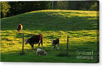 In The Field Canvas Print by Randi Shenkman