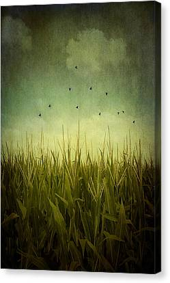 In The Field Canvas Print by Trish Mistric