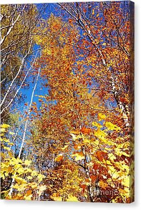 In The Forest At Fall Canvas Print
