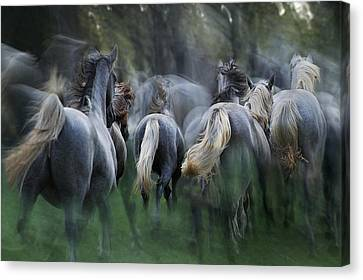 In The Gallop Canvas Print by Milan Malovrh