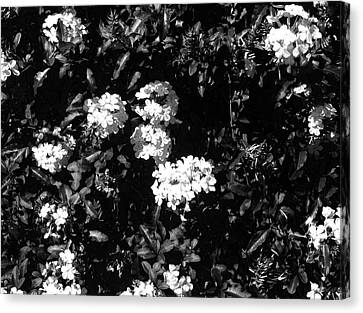 Canvas Print featuring the photograph In The Garden- Black And White by Alohi Fujimoto