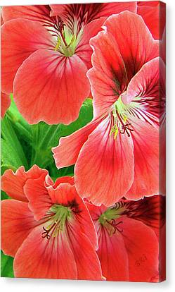 In The Garden. Geranium Canvas Print by Ben and Raisa Gertsberg