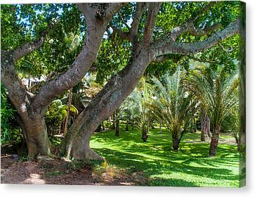 In The Garden. Mauritius Canvas Print by Jenny Rainbow
