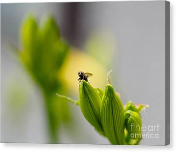 In The Garden - The Champ Canvas Print
