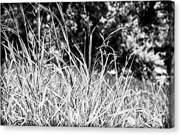 In The Grass Canvas Print by Andrew Raby