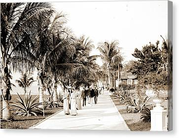 Royal Poinciana Canvas Print - In The Grounds Of The Royal Poinciana, Palm Beach, Fla by Litz Collection