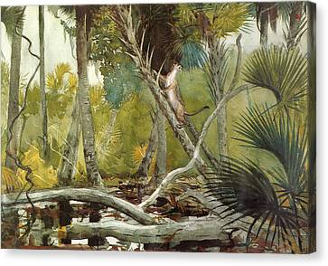 In The Jungle Canvas Print by Winslow Homer