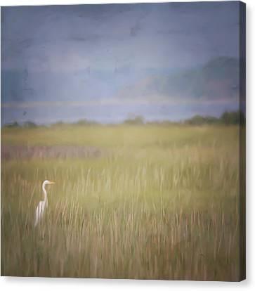 In The Marsh  Canvas Print by Kerri Farley
