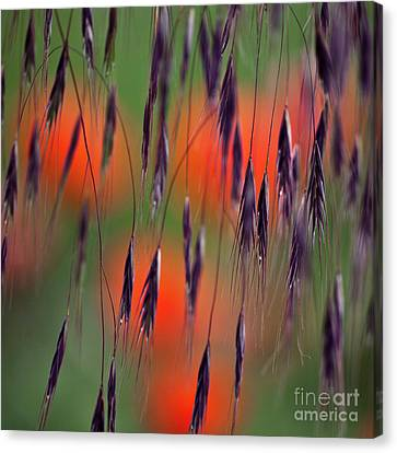 In The Meadow Canvas Print by Heiko Koehrer-Wagner