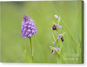 In The Meadow  Canvas Print by Tim Gainey