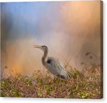 In The Nest - Great Blue Heron Canvas Print by Kim Hojnacki