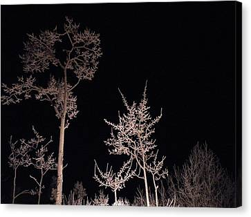 Canvas Print featuring the photograph In The Night Garden by Brian Boyle