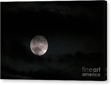 In The Night Sky 5a Canvas Print by Sharon Talson