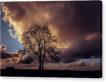 In The Pink Canvas Print by Chris Fletcher
