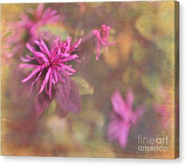 In The Pink Canvas Print by Judi Bagwell