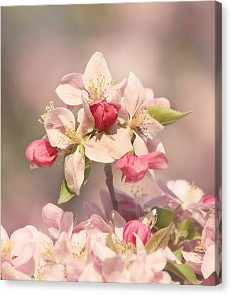 In The Pink Canvas Print by Kim Hojnacki