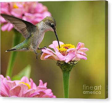 Canvas Print featuring the photograph In The Pink by Olivia Hardwicke