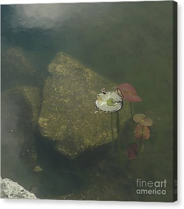 Canvas Print featuring the photograph In The Pond by Carol Lynn Coronios