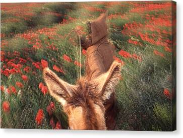 Canvas Print - In The Poppy Fields by Rolf Ashby